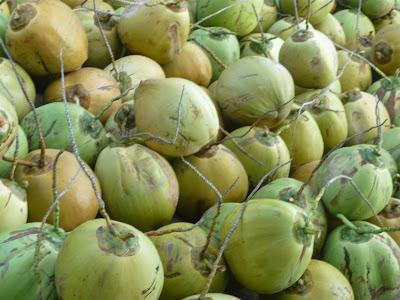 """budidaya kelapa natural nusantara pupuk organik nasa distributor produk pupuk nasa poc nasa hormonik supernasa power nutrition pestona bvr glio order pupuk pestisida"""
